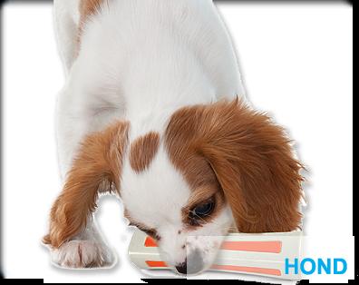 assortiment-hond