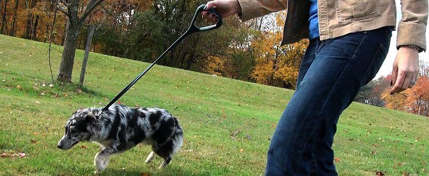 The perfect leash