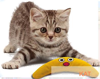 Petstage speelgoed voor de kat